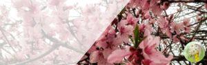 MimosaのYoutubeチャンネル